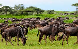 6 Days Serengeti Safari