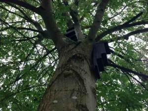 Kent bat boxes in woodland site