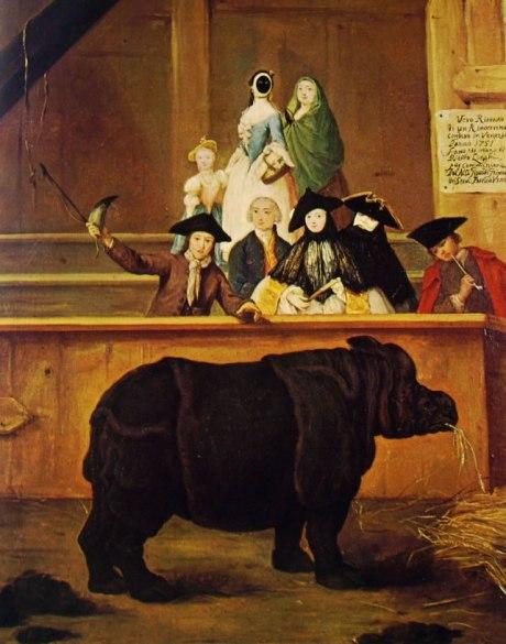 luglio 1750: a Senigallia arriva Clara, una celebrità