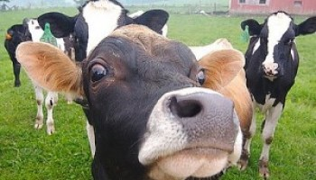 Biogas from Animal Wastes | EcoMENA