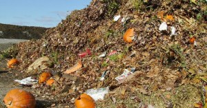 Organic_Wastes_Middle_East