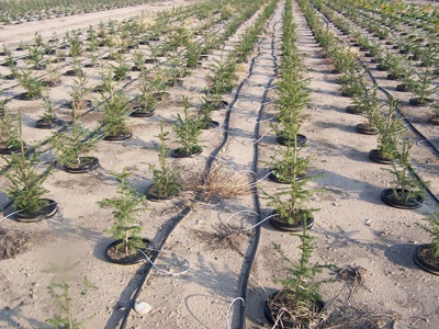 drip-irrigation-gcc