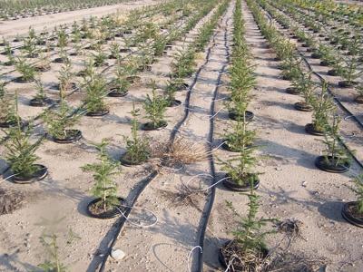 dripirrigation