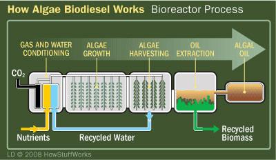 algaebiofuels