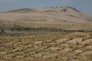 desertificationmena