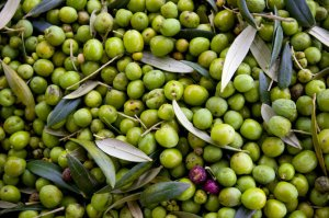 olive-oil-wastes
