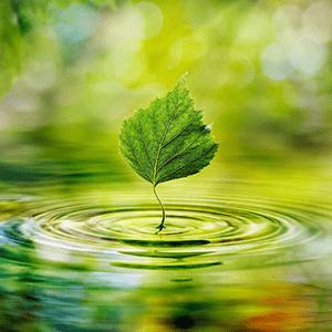 sustainability-islam