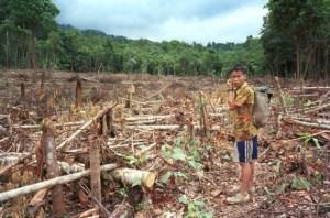 indigenous-communities-deforestation
