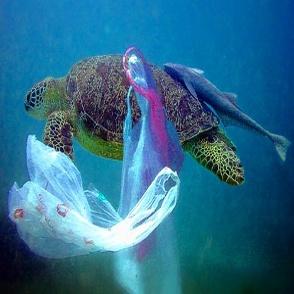 turtleplasticingestion