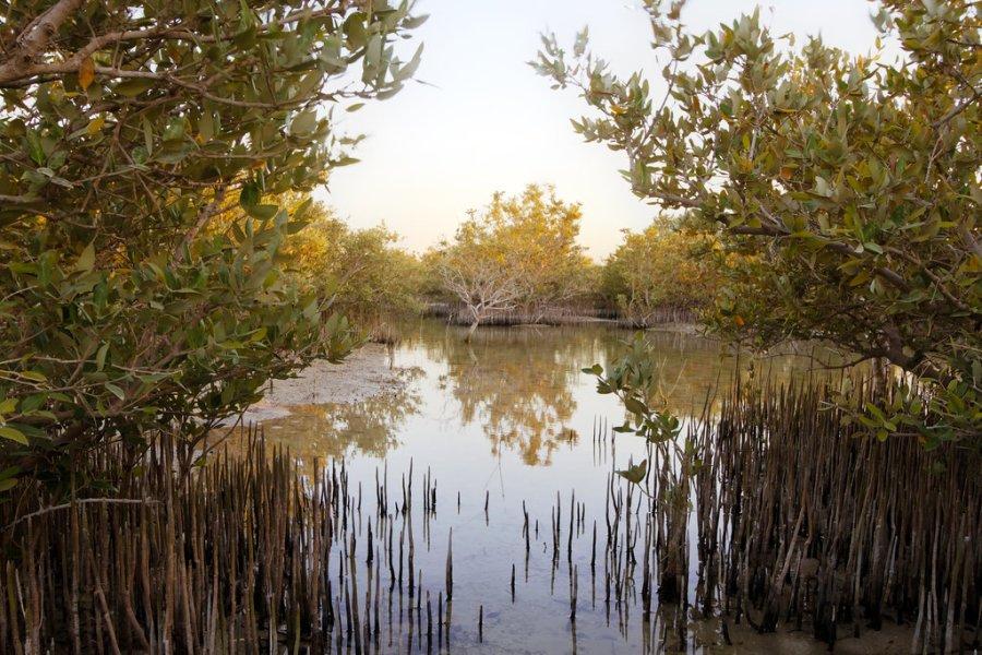 mangroves-qatar-wakra