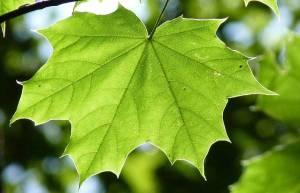 green-finance-middleeast