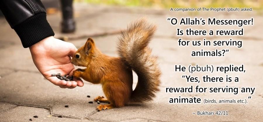 animal-welfare-islam