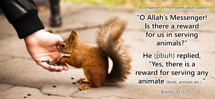 animal-welfare-islam