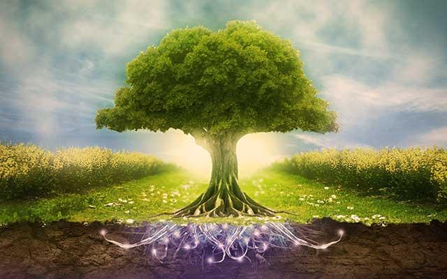environmental-psychology