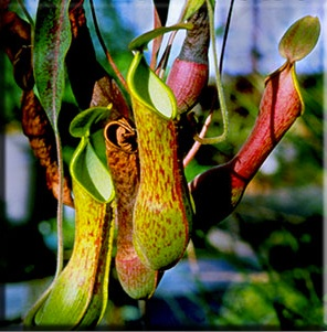 Positive externalities from the concept of the pitcher plant.
