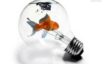 fish-in-lightbulb