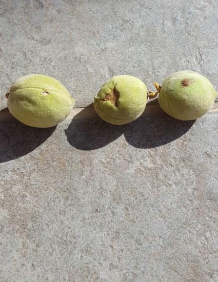 Immature peaches