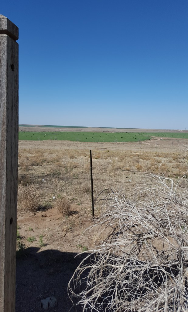 Picture of dry land with small patch of irrigated grazing