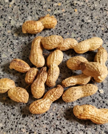 Shell peanuts for eating