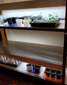 Double grow lights with seedlings