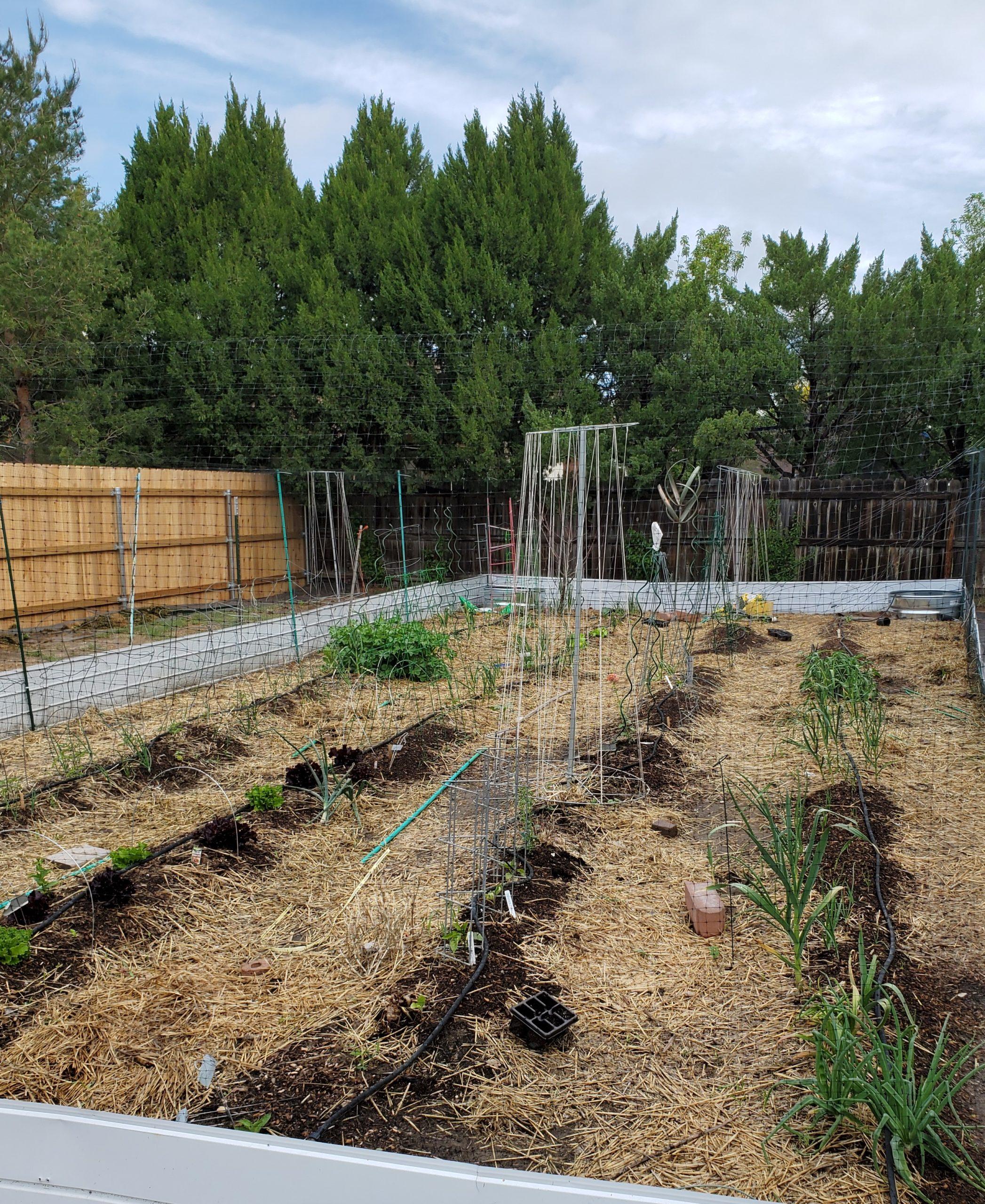 A Raised Row Garden