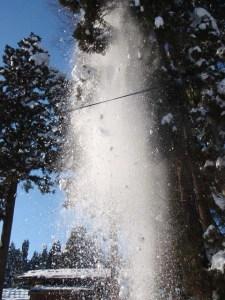 センターの近くの杉の木。枝に積もっていた大量の雪が落ちてきた瞬間です。真下にいたら大変なことになっていました。