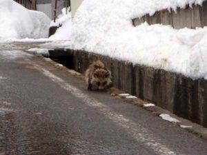 道路わきの白線の内側を、ブルブルふるえながら歩いていました。