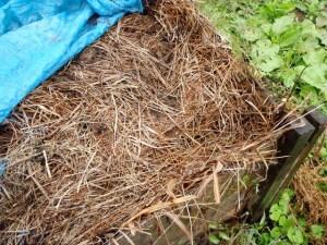 刈り取った草を集めた木枠の中。青々としていた草が今は茶色に変っています。