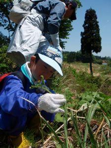 小学1年生の子もワラビ採りに挑戦しました。