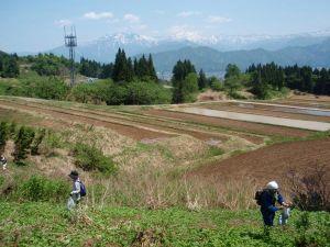 足下の芽吹きはもちろん、2,000メートル級の山々を望む大パノラマの景色も楽しみました。