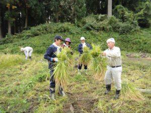 豪雨で土砂が流入した田んぼの手刈り作業で、地元の長老から稲束のまとめ方を教わる。