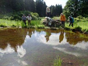 水が張られたかつての棚田。オタマジャクシがいっぱいでした。