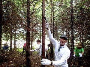 初めての枝打ち。インド出身の参加者もすぐに慣れて、みんなで300本以上の木をきれいにしました。