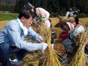 地元の人からイネの束ね方を教わる参加者
