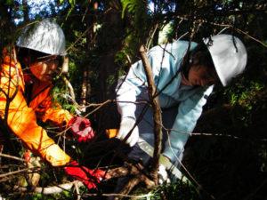 小学生の女の子も森林整備に挑戦しました。