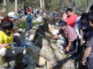標高900m前後の山の中で、間伐した樹木にキノコのコマ打ち作業をする参加者と地元のみなさん。細いほだ木を想像していた首都圏からの参加者らは木の太さにびっくり。