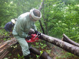 ブナの丸太をチェーンソーで玉切りに。急斜面での危険な作業なので緊張感があります。