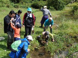 保全地域での観察。以前は乾燥してカヤなどが密生していた棚田跡は、水を引き込んだために次々と生きもの姿が戻ってきています。