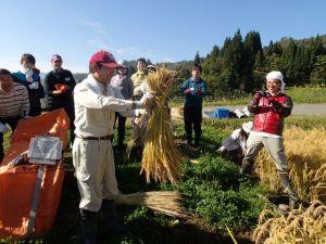 稲刈り前に、地元の笛木さんから刈取り方を習う。