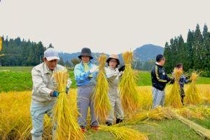 稲刈りは、刈った稲を束ねるところが難しい。