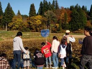 毎回観察している、スイレンの田んぼ。まわりの木々が色づき、スイレンの葉も黄色くなっていました。