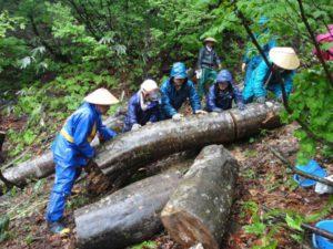 雨で滑りやすくなっている傾斜地で、協力して大きな丸太を動かしました。