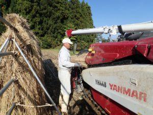 天日乾燥した稲からモミを外す脱穀作業