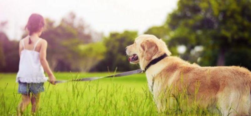 animales, gatos, perros, asma, mascotas, salud, colesterol, autismo
