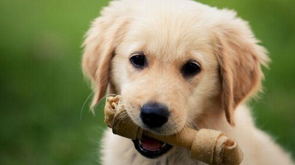 golosinas, mascotas, huesos