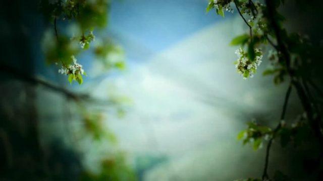 meditación, naturaleza, medio ambiente, espiritualidad