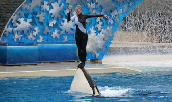 A judge has ruled that SeaWorld is responsible for the 2010 death of trainer Dawn Brancheau
