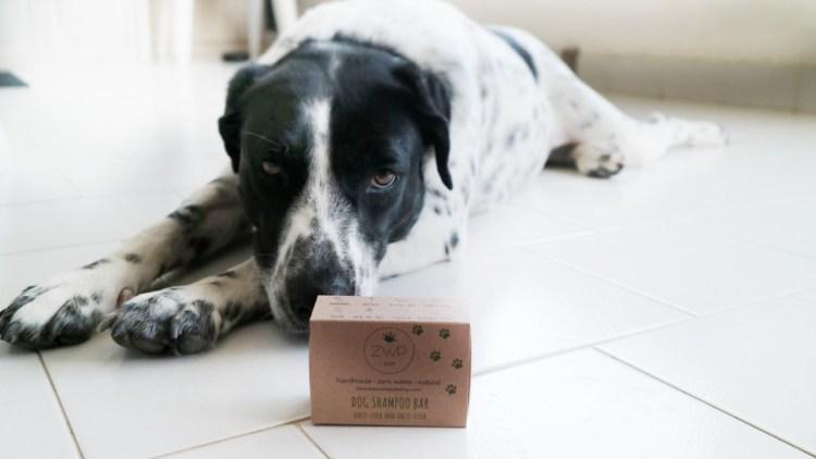 Sapone solido per cani di Zero Waste Path Shop: test e recensione.