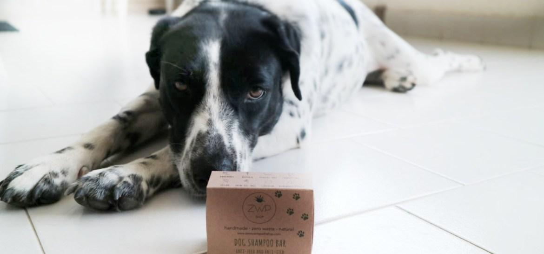 recensione-sapone-solido-per-cani-zero-waste-path-shop