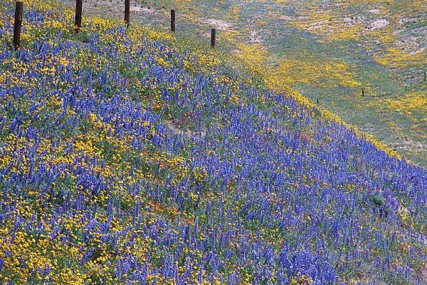 Sue And Craig Dremann California Wildflower Adventure 2003